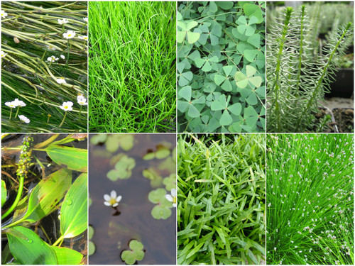Oxygenating Plant Collection