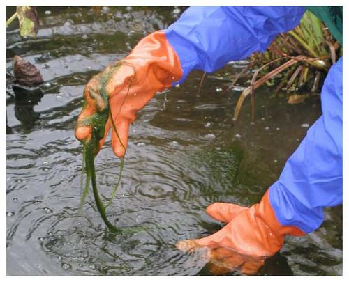 Lotus Pond Gloves