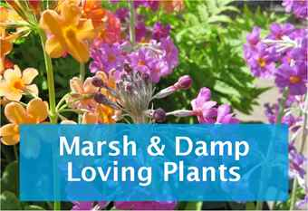 buy-marsh-plants.jpg