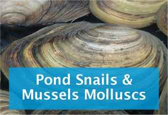 buy-snails-and-pond-mussels.jpg