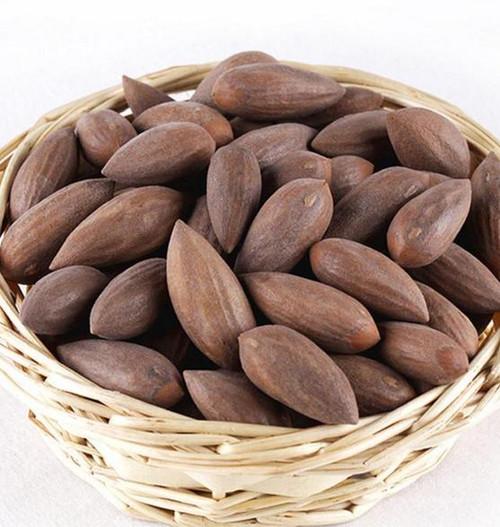 Fei Zi Chinese Nutmeg Yews