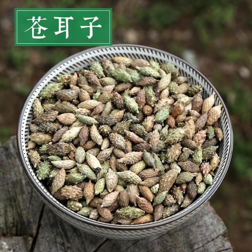 Cang Er Zi Siberian Cocklour Fruit