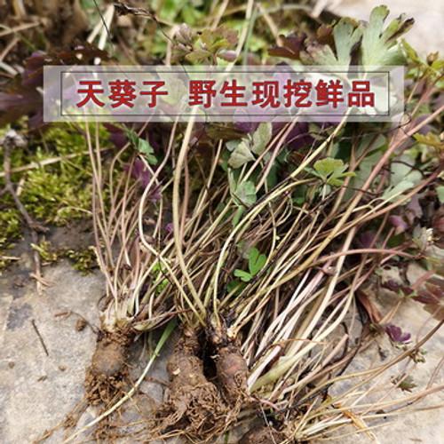 Ye Sheng Tian Kui Zi Wild Muskroot-like Semiaquilegia Root