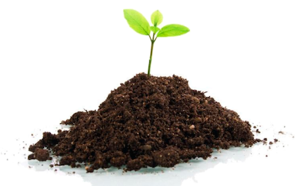 image-plant-in-soil.png