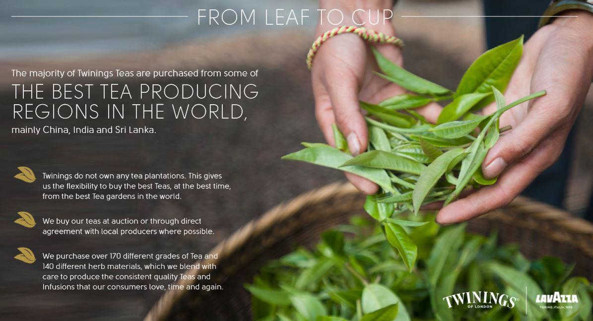 twinings-leaf-to-cup.jpg