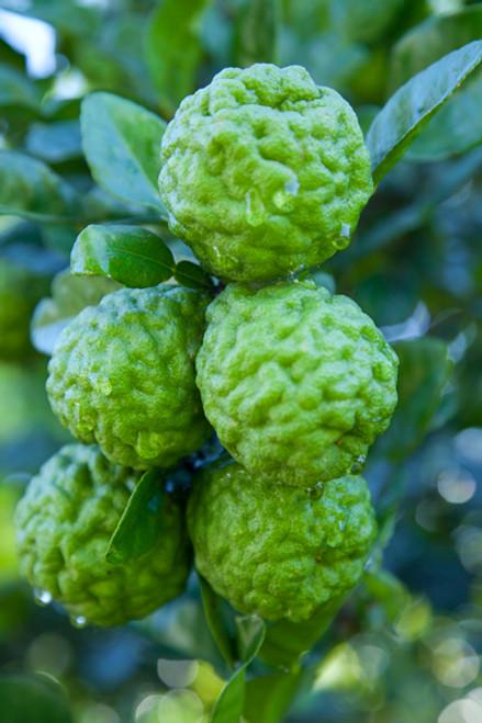 Limes Kaffir Chemical Free Local - each (approx.)