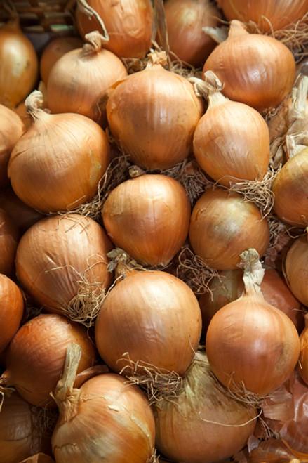 Onions Brown Organic - each (approx.)