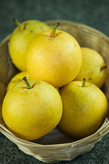 Pears Nashi Organic - per kg