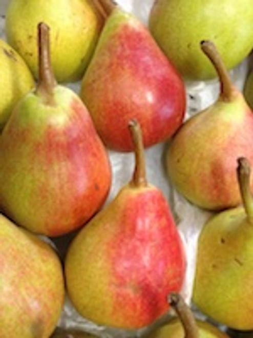 Pears Clapps Organic - per kg