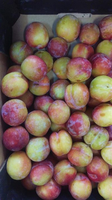 Plums Radiance Organic - each (approx.)