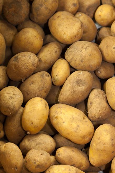 Potatoes Dutch Cream Organic - per kg