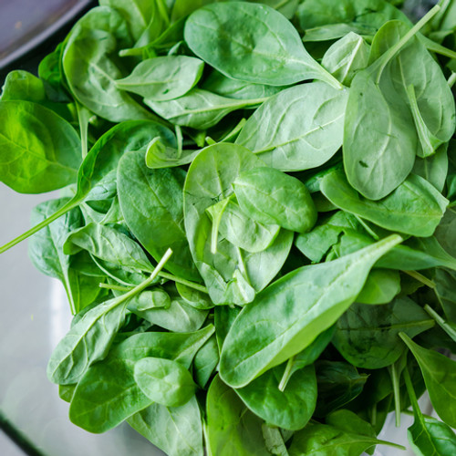Spinach Baby English Organic - Punnet