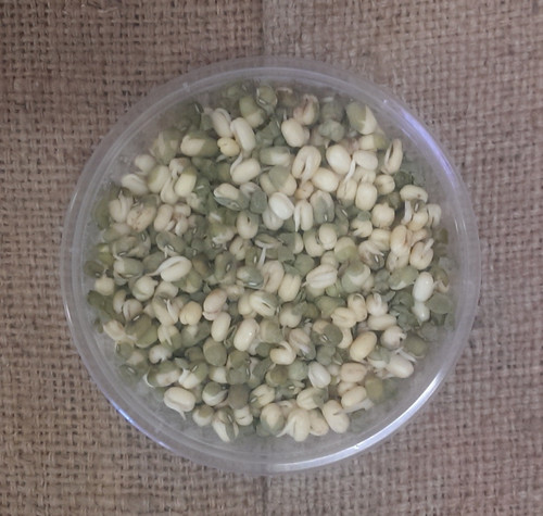Sprouts Broccoli Organic -  Punnet