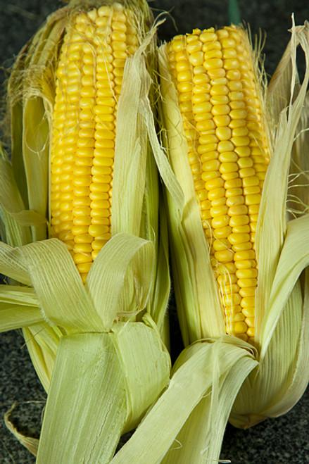Sweet Corn Cob Organic - each