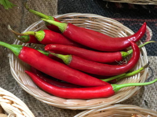 Chillies Long Red Organic - per 50g