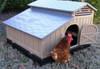 Snap Lock Std Chicken Coop