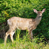 """Fencer Wire Deer and Animal Fence Barrier Netting 7 ft. x 100 ft. with Mesh Size 3/4"""" (Light)"""