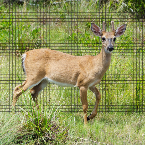 "Fencer Wire Deer and Animal Fence Barrier Netting 7 ft. x 100 ft. with Mesh Size 3/4"" (Heavy Duty)"