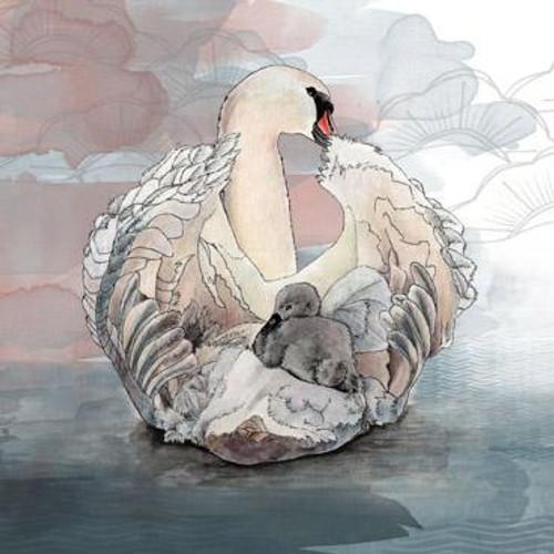 Swan and Cygnet Greeting Card