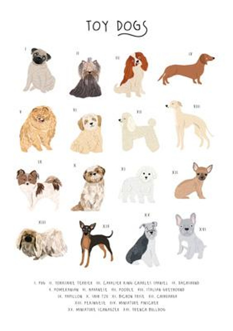 Toy Dogs Greeting Card