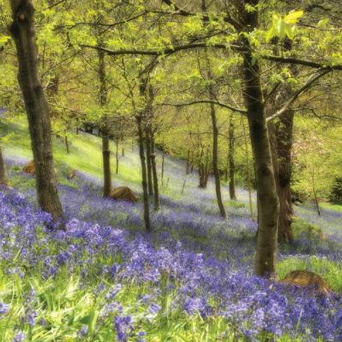 Bluebell Oasis Greeting Card