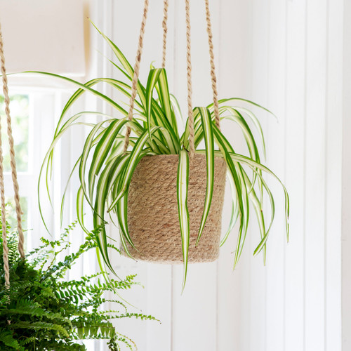 Small Woven Hanging Plant Pot