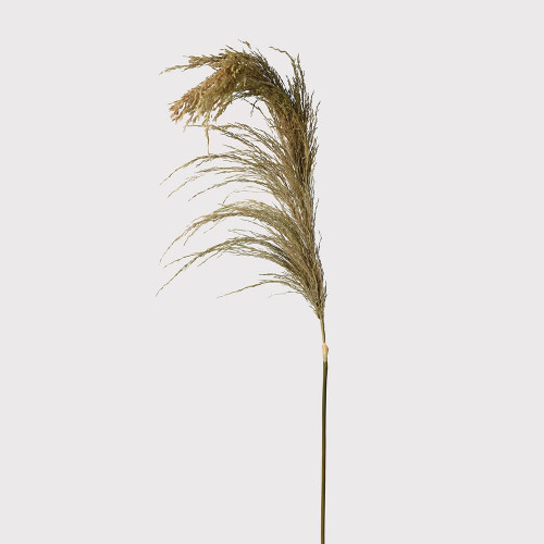 Real Dried Wheat Stem