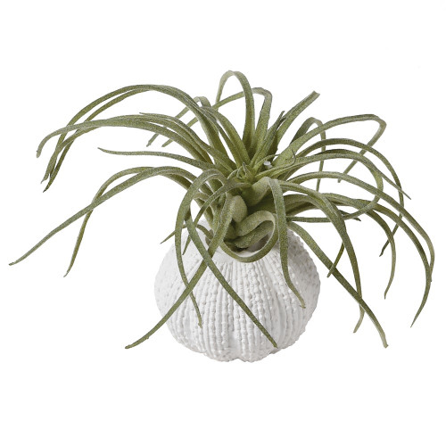 Green Tillandsia mini in Faux Orchin Pot