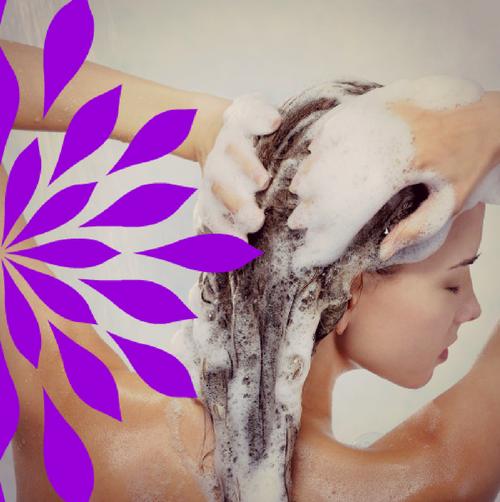 Shampoo Bar: Lavender
