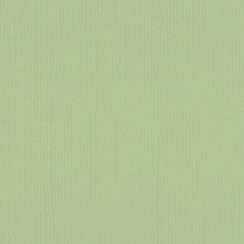 205580 Mint Tulip