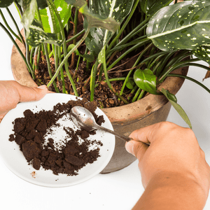 Clever Uses for Used Coffee Grounds