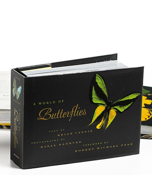 A World of Butterflies View Product Image
