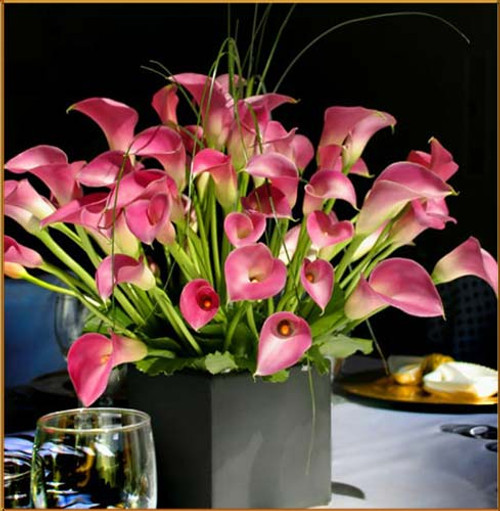 Garnet Glow Mini Calla Arrangement - OH Class