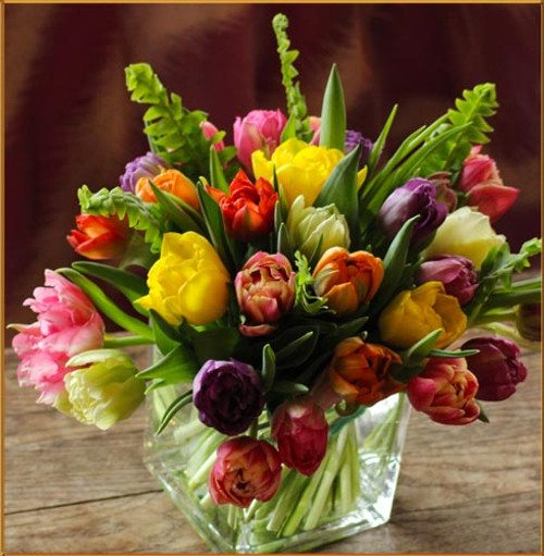 Rainbow Double Tulips
