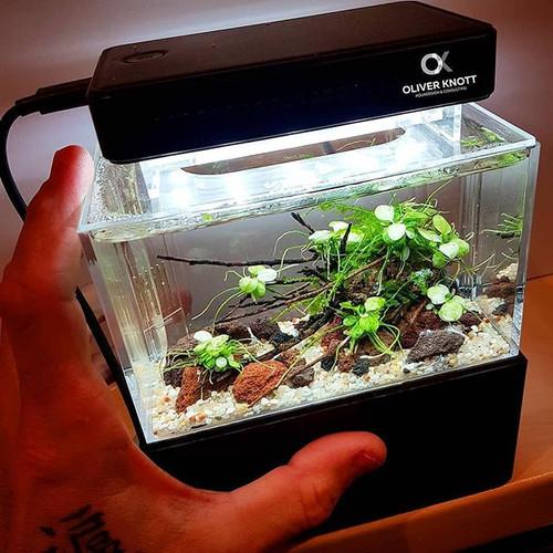 Aquarien Haustierbedarf Aquarium