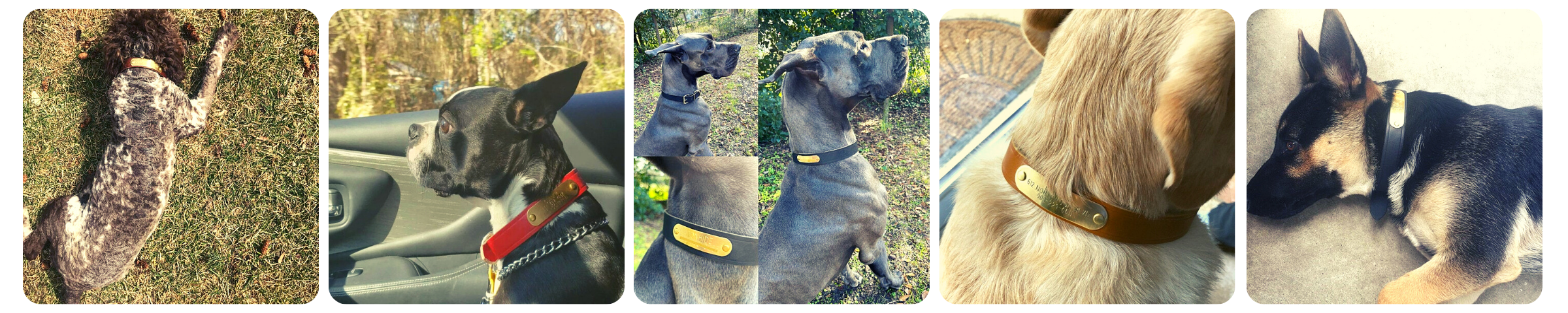 Dogs with Warner-Brand Leather Collars