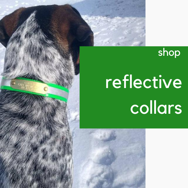 reflective dayglo dog collars