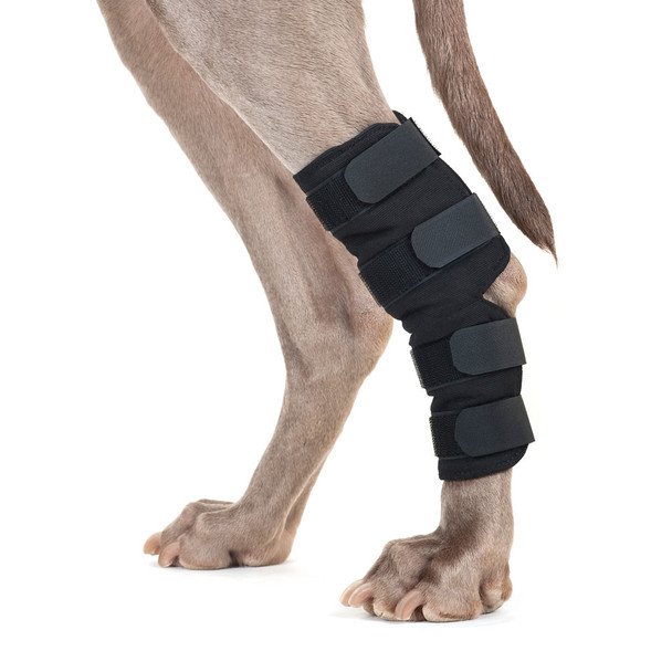 Back on Track Therapeutic Dog Hock Wrap