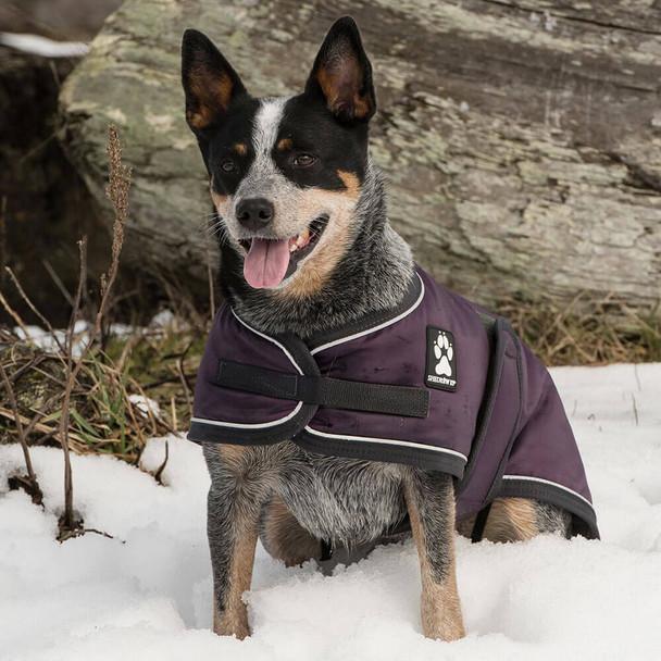 Shedrow K9 Tundra Dog Coat in Plum Perfect