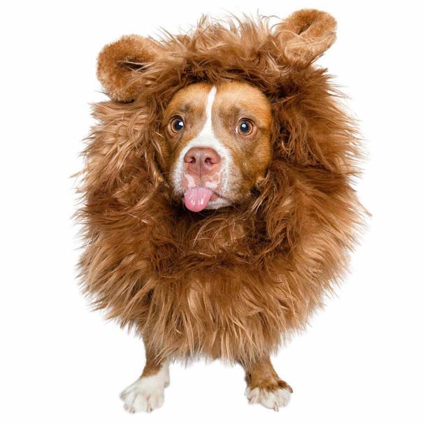 Pet Krewe Lion Mane Dog Costume