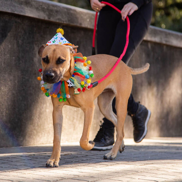 Pet Krewe Birthday Hat & Collar Dog Costume