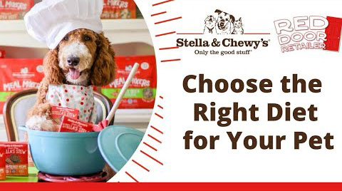 Choose the Right Diet for Your Pet