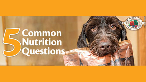 5 Common Nutrition Questions