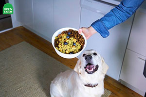 Dog Eyeing a Bowl of Open Farm
