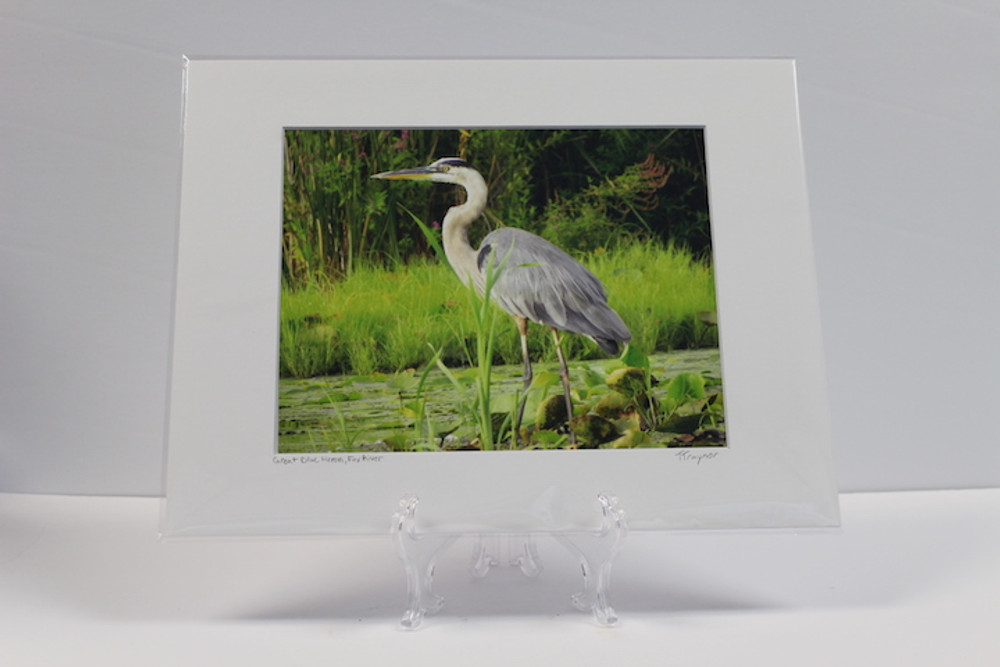 Pre-matted White - Great Blue Heron, Fox River