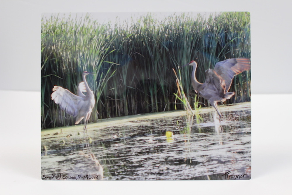 Sandhill Cranes, Fox River - Metal Photo