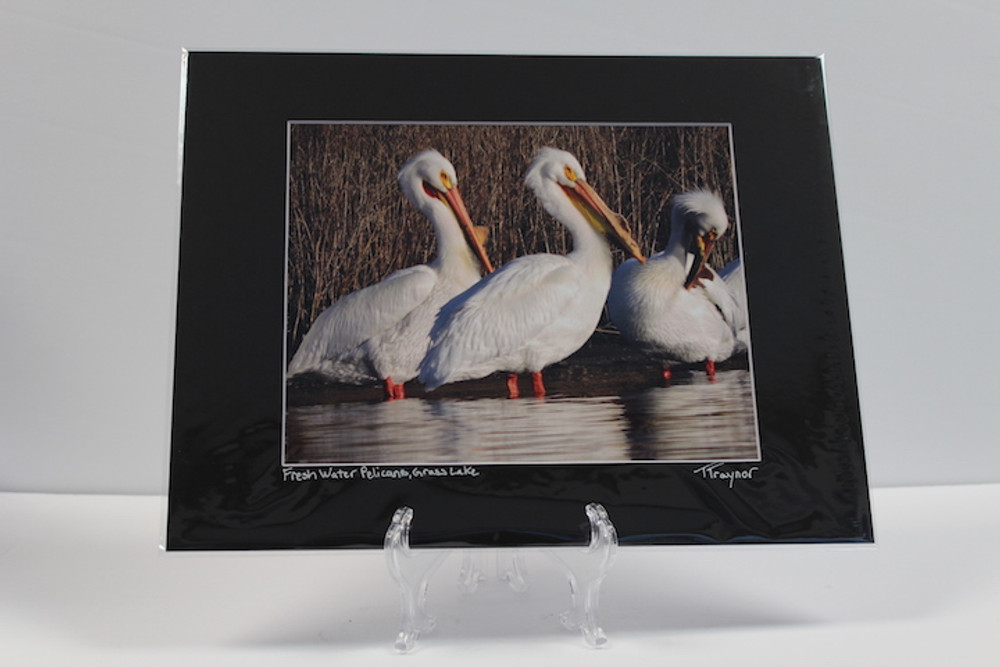 Pre-matted Black - Fresh Water Pelicans, Grass Lake