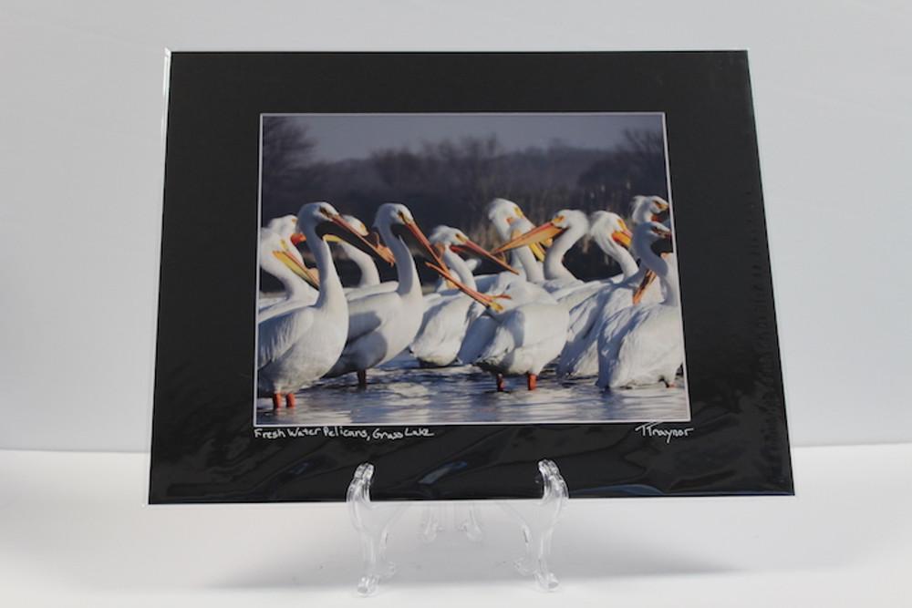 Pre-matter Black - Fresh Water Pelicans, Grass Lake