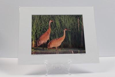 Pre-matted White - Sandhill Cranes, Fox River - 2