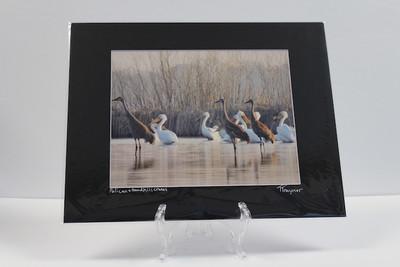 Pre-matted Black - Pelican & Sandhill Cranes